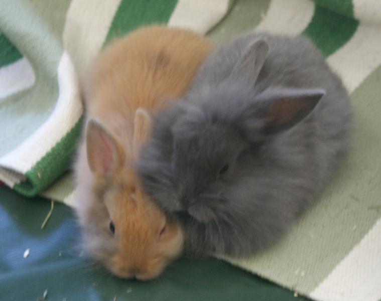Mukelchen und Knut